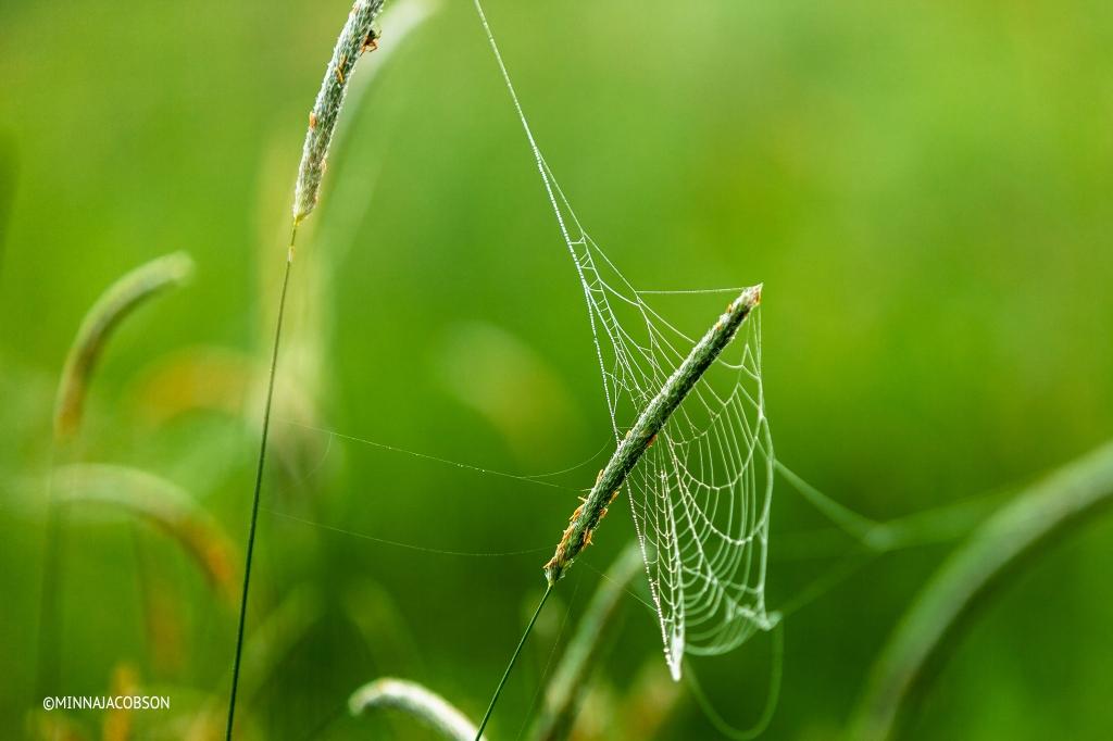 Spider hiding behind a stalk, Lohja Finland
