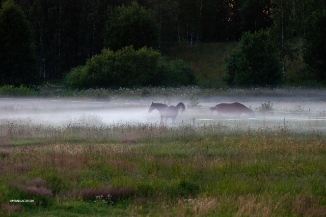 Horses in a mist at night
