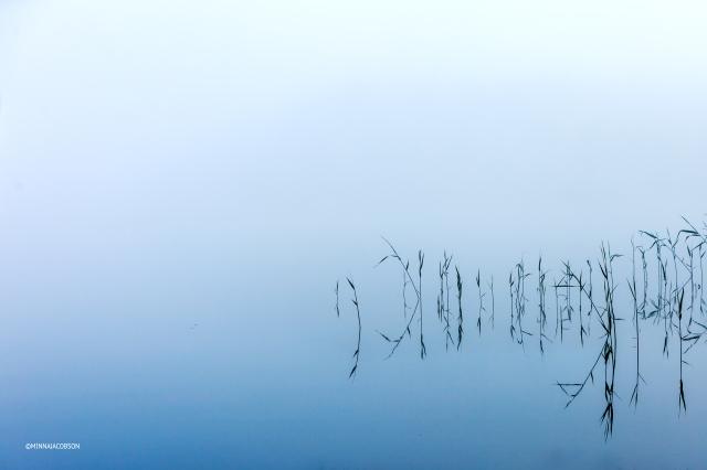 Graphical reeds, Lohjanjärvi Lohja Finland