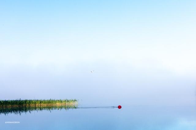 Red ball and black-headed gull, Lohjanjärvi Lohja Finland